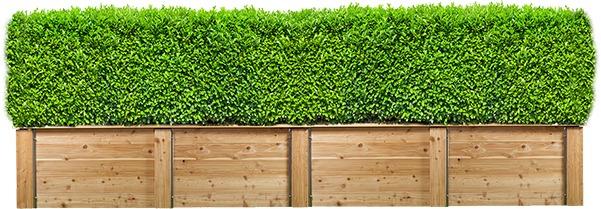 neskončna živa lesena ograja